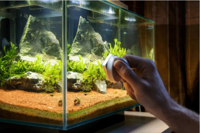 Comment nettoyer un aquarium